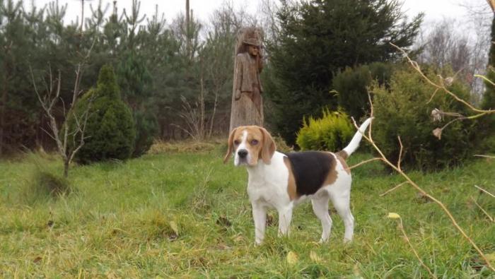 пропала собака-девочка Лозана ( тел 868779254)