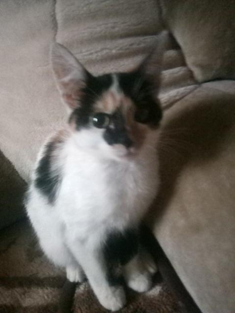 котенка-девочку