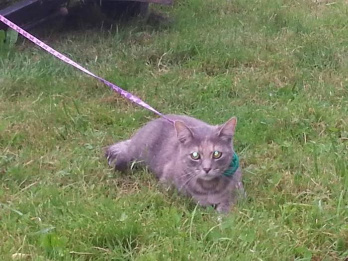 Пропала кошка (Мета) Нашедшего просьба позвонить(862767256 , 860798898)