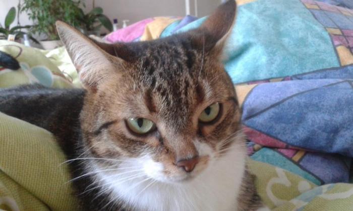 пропала кошка по кличке Зайка в районе Парко 17 ( кошечка нашлась)