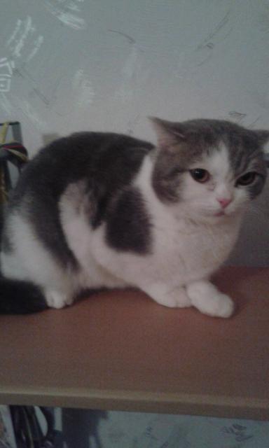 найден кот ( не кастрированный) по ул. Космосо (пристроен)