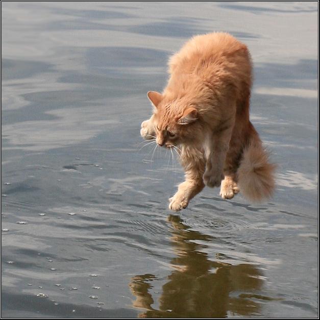 Левитирующий кот