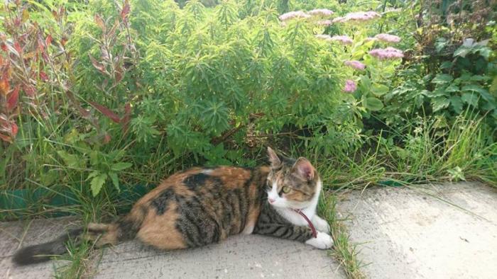 Пропала кошка по ул. Энергетику. Стерелизованная. Зовут Лиса. Ирина 862185510 irusia@mail.ru