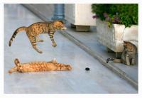 Левитирующий котенок