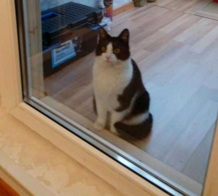 пропала кошка по адресу Седулинос Ал 35 по кличке Ника ( тел  865990598- Валера)
