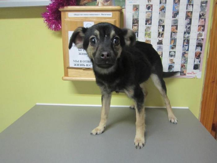 найдена собака -мальчик Nr.112 (4 мес)-tel.867615359