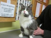 В связи с отъездом отдадим в добрые руки стерилизованную кошку (возраст 12 лет,  ласковая,общительная, аккуратная)