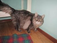 Найден кастрированный кот в подъезде по ул. Тайкос 40