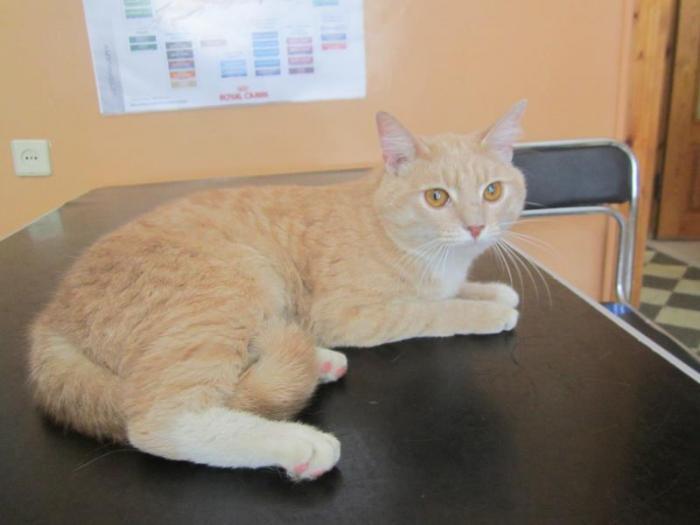 В доме по ул. Ветерану 8 около 2-х недель в подъезде находится кастрированный кот (пристроен к новым хозяевам)