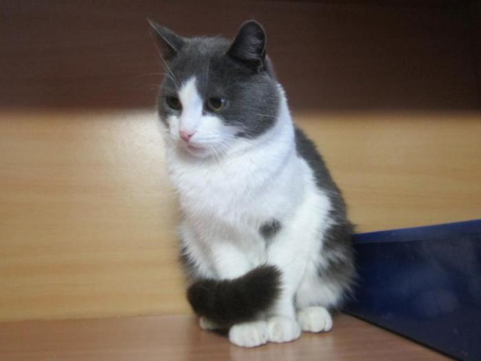 "Найдена кошка  возле ''IKI"" 3 мкр"