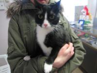 кастрированный кот2 года тел.867188306