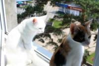 стерилизованные  кошка (Аида) и  кот (Зевс)1 год