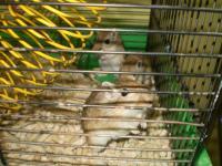 pescanyje myski