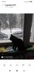 2019-12-15 в районе Тайкос пр. 42 потерялся черный кастрированный кот Васька-Капитан ( просьба позвонить по тел. 862637402)