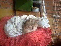 пропал кот по кличке Филип в 1мкр по ул Висагино ( тел 868262053)
