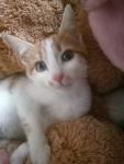 котенка мальчика